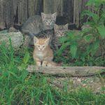 INT 37 Ferienhof Lang Katzen