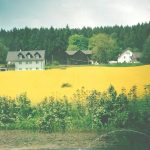 INT 37 Ferienhof Lang Rapsbild2